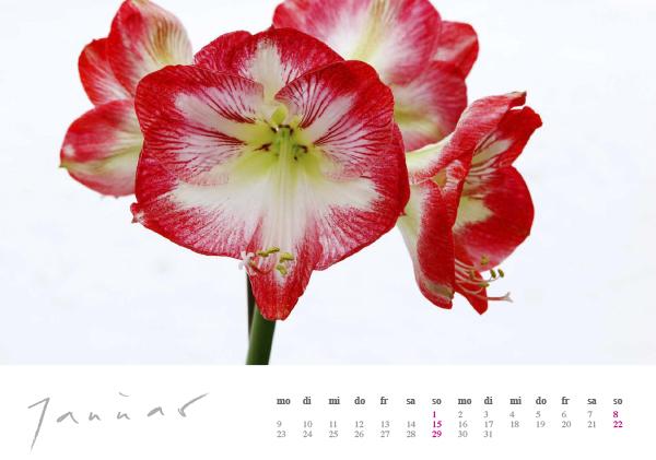 Kalender Dennenlohe